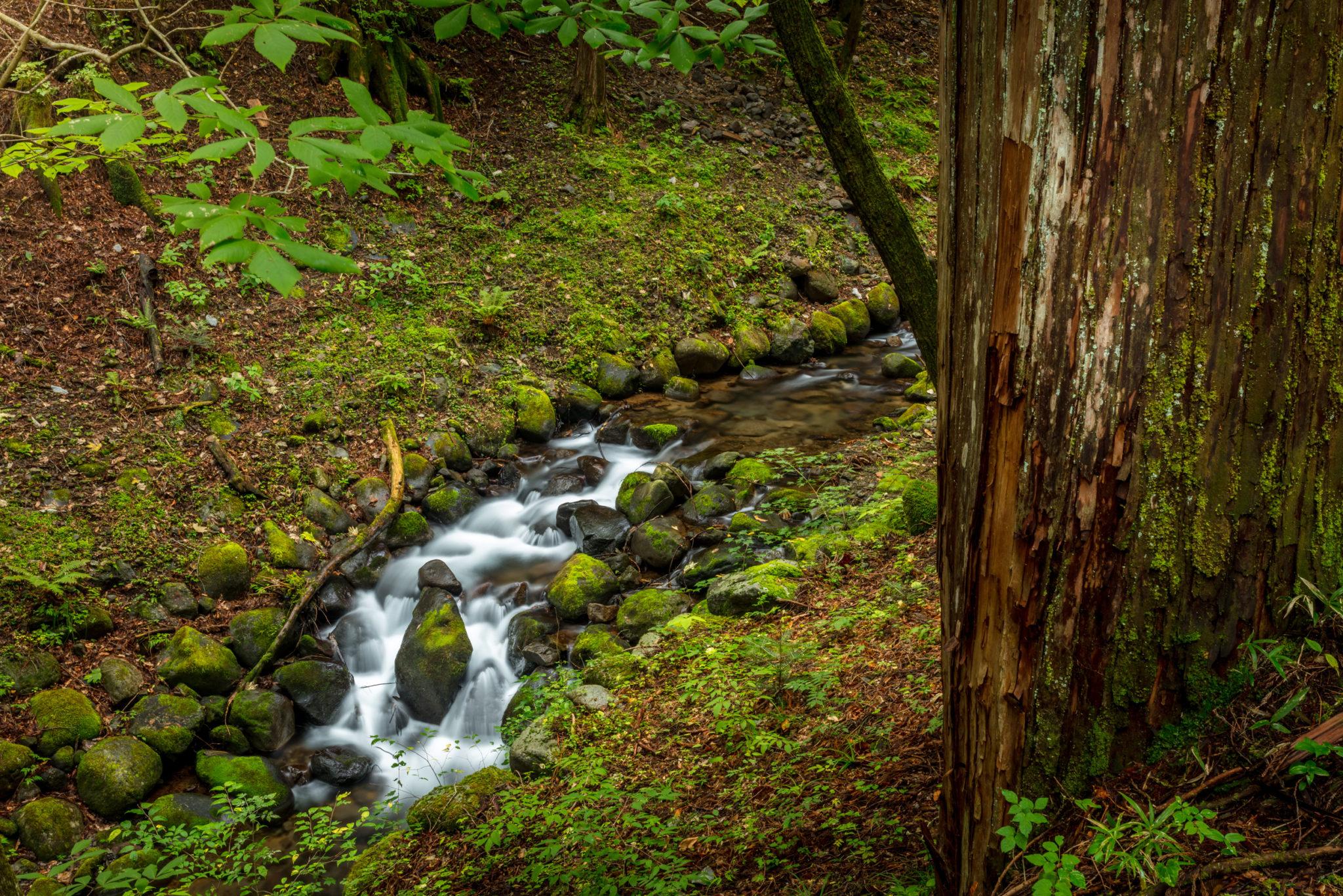 Waterfall in Nikko Japan